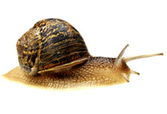 Marie Claire news: Snails becoming more popular as food