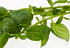 Basil is the latest anti-ageing superfood
