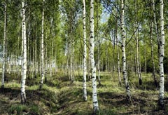 Trees - News - Marie Claire