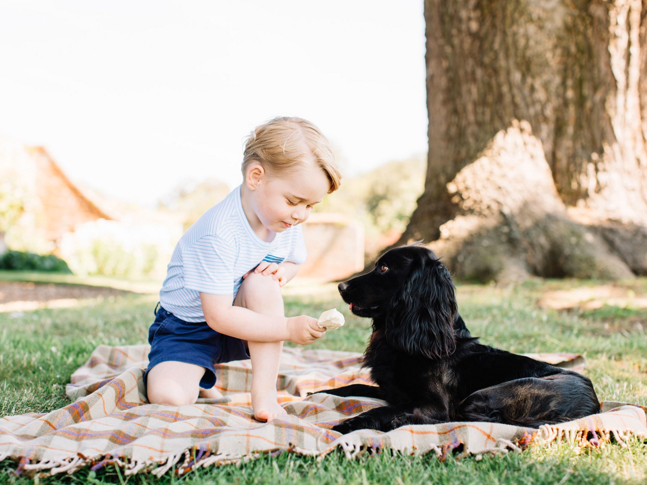 Prince George and dog