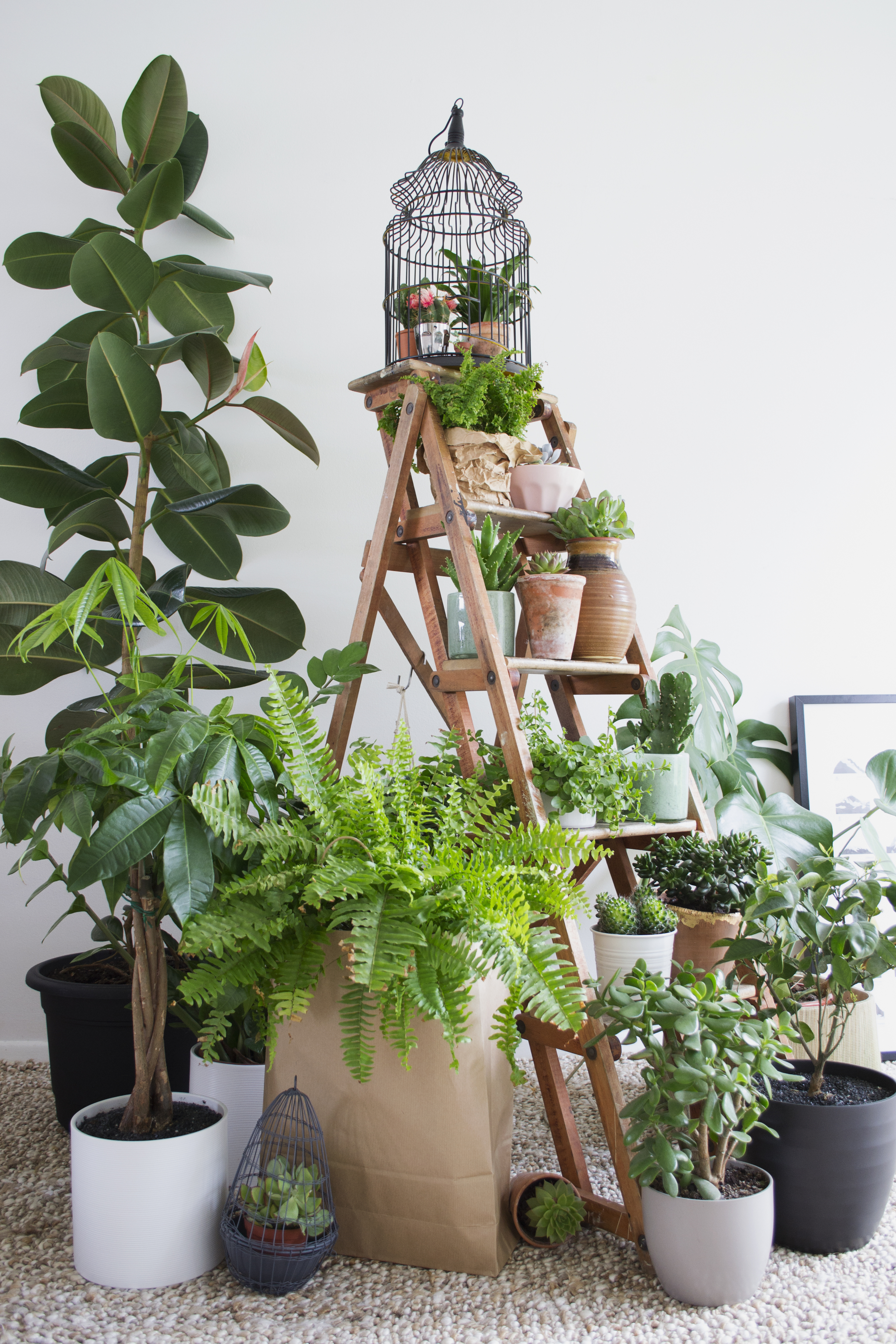 U0027Step Up Your Indoor Garden Game With A Set Of Wooden Ladders That You Can  Fill Top To Bottom With Your Leafy Friends And Make A U0027plant Gangu0027 Just  Like ...
