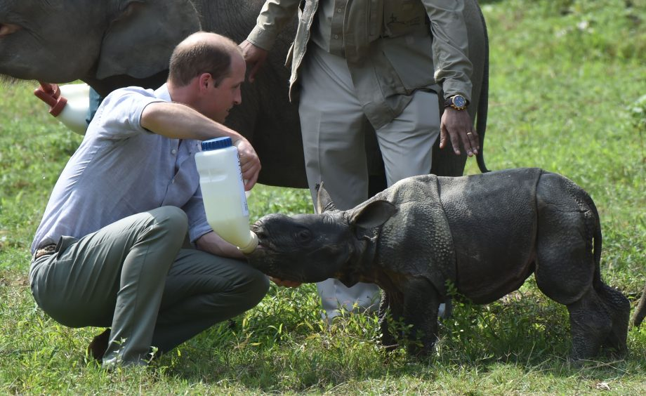 Prince William Baby Rhino