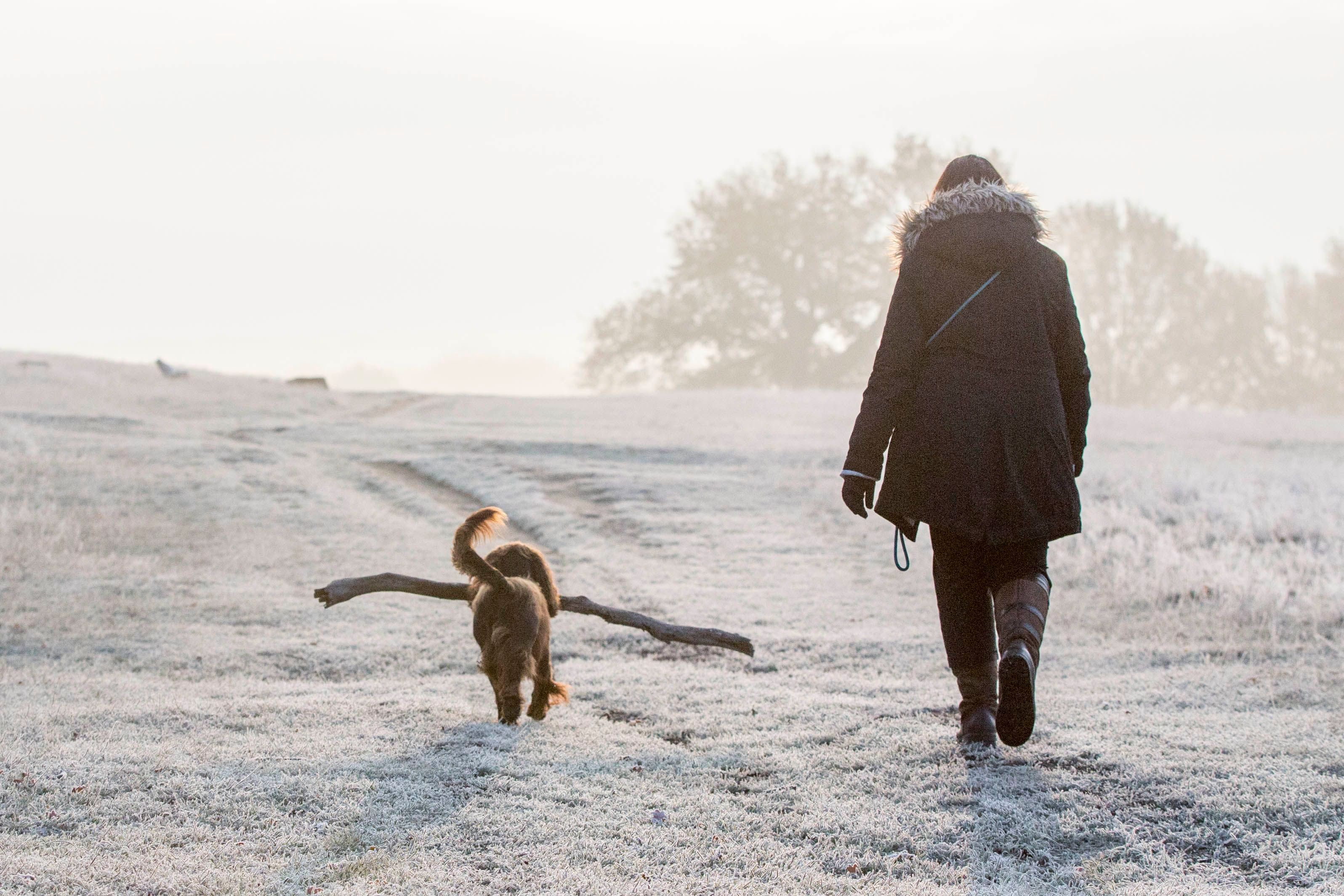 Why we mourn dogs in the same way that we mourn humans