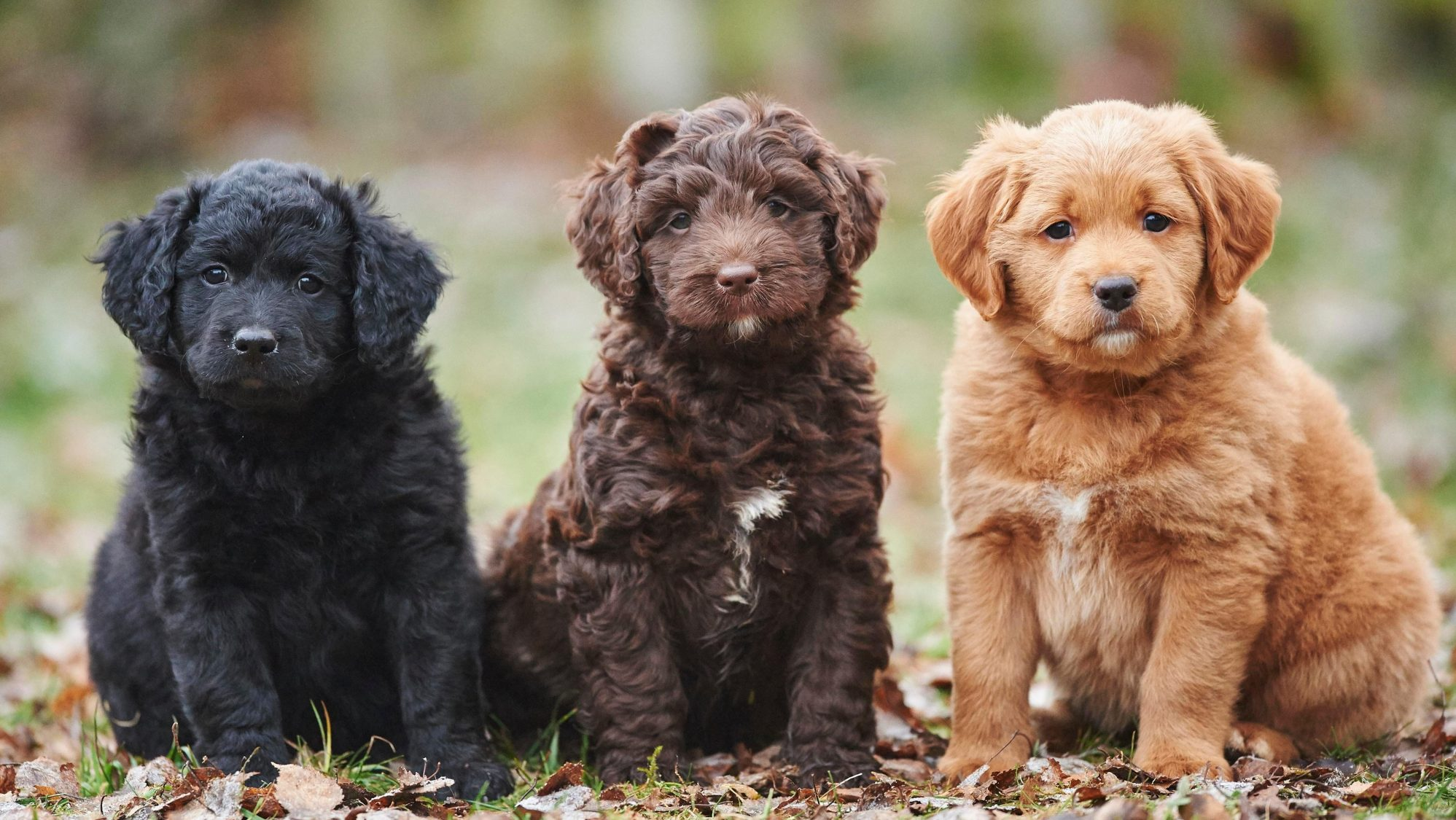 Instagram's most popular dog breed has officially been revealed