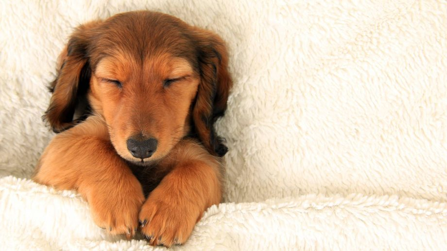 Science says it's better to sleep next to a dog than a human