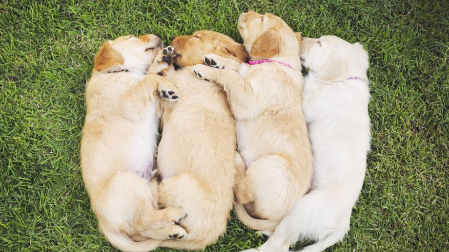 These are the most popular puppy names and they're beyond cute