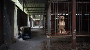 dog meat trade
