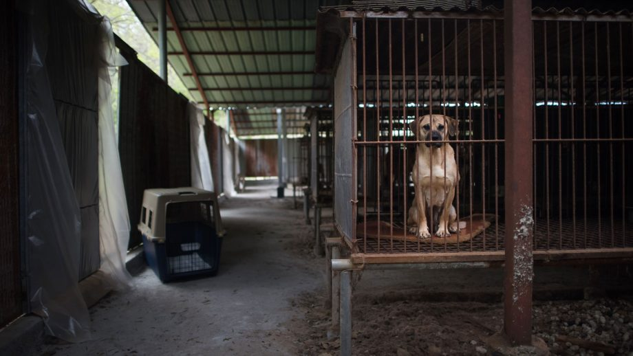 dog meat farms
