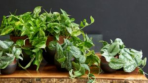 Houseplants are the ultimate stress reliever you need in your home