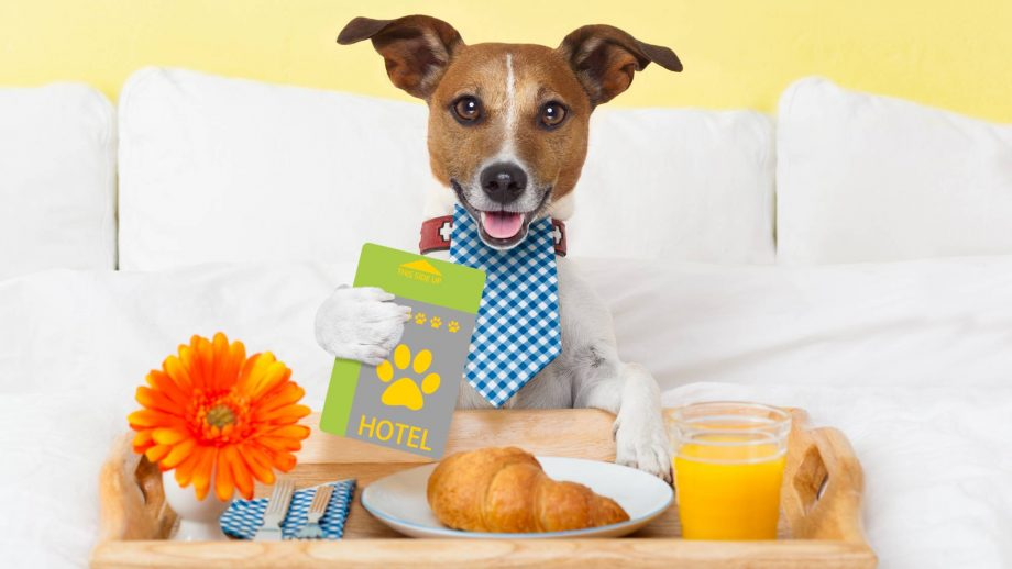 Your dog can now get a job as a fancy hotel reviewer (and you can go, too)