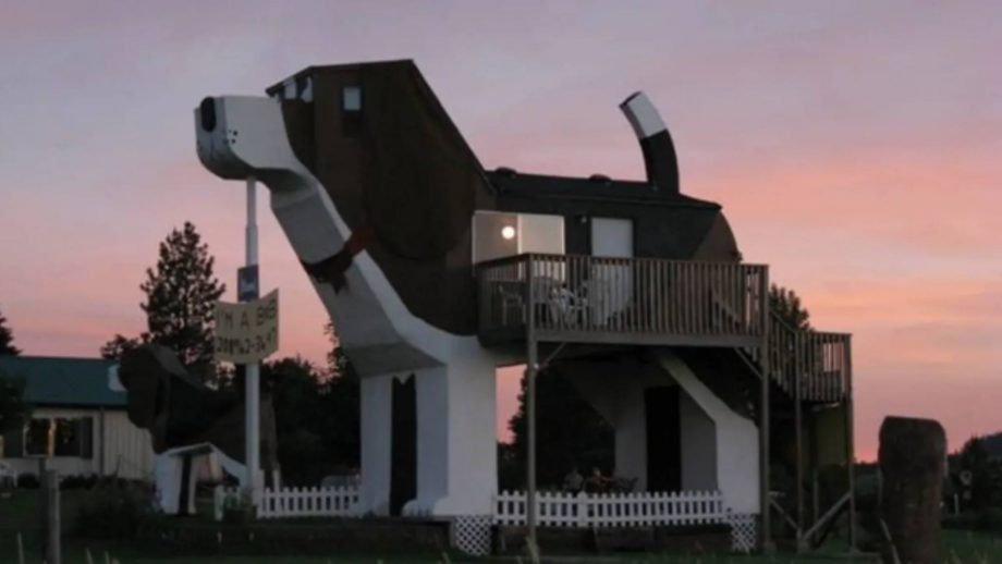dog shaped airbnb