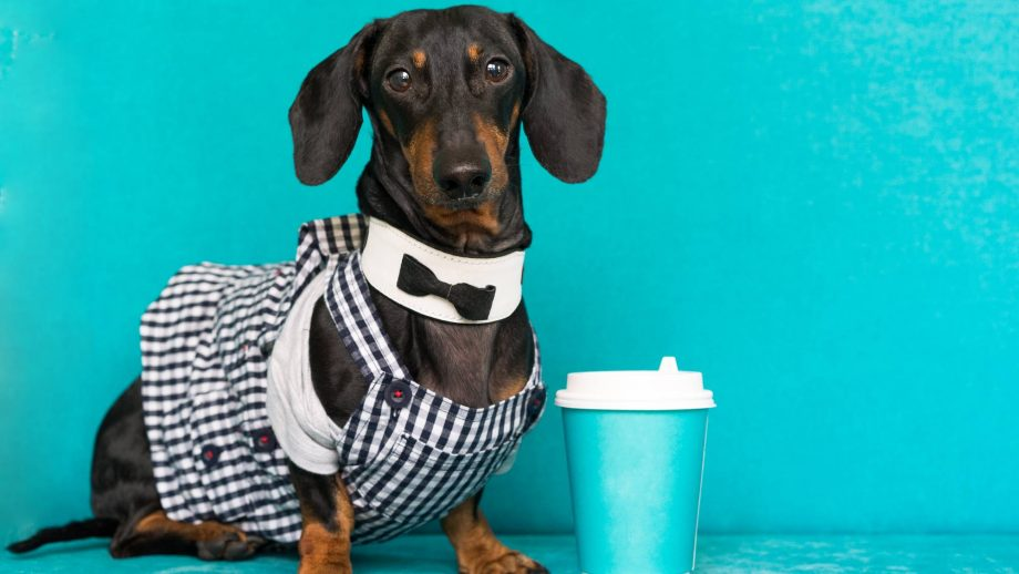 dog coffee 1085003848