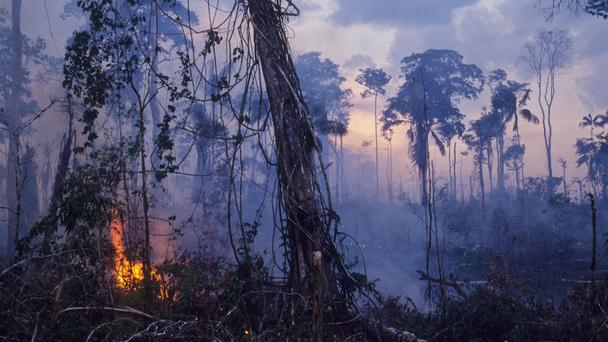 The Amazon rainforest is still burning, and the destruction is devastating