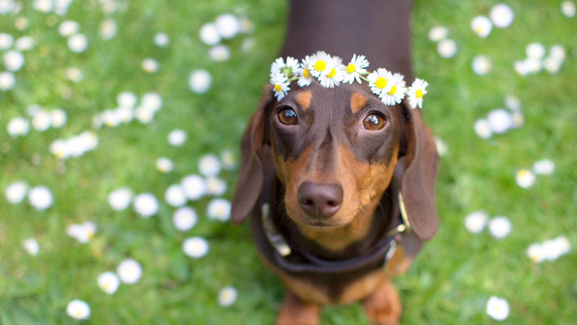 A sausage dog disco is happening next weekend and this is not a drill | Marie Claire