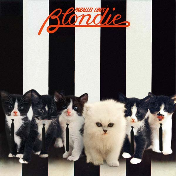 28 Kittens On Album Covers
