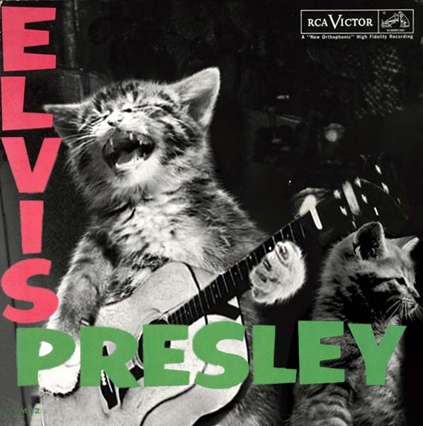 28 Kittens On Album Covers Nme