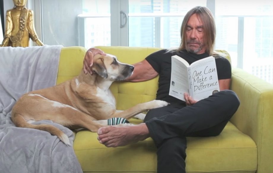 This Iggy Pop And Nick Cave Peta Video Is The Cutest Thing