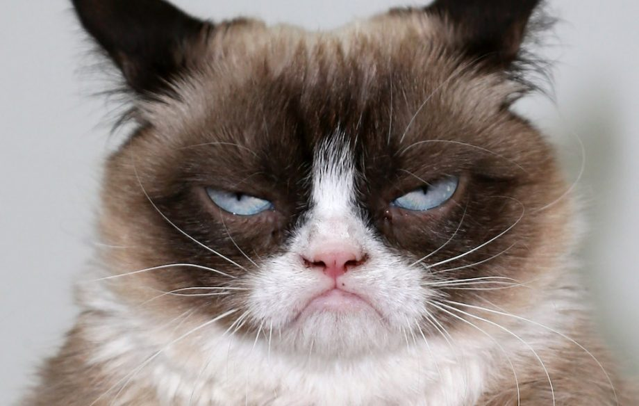 Image of: Tartar Sauce Grumpy Cat Nmecom Grumpy Cat Sued Coffee Companyu2026 And Won Nme