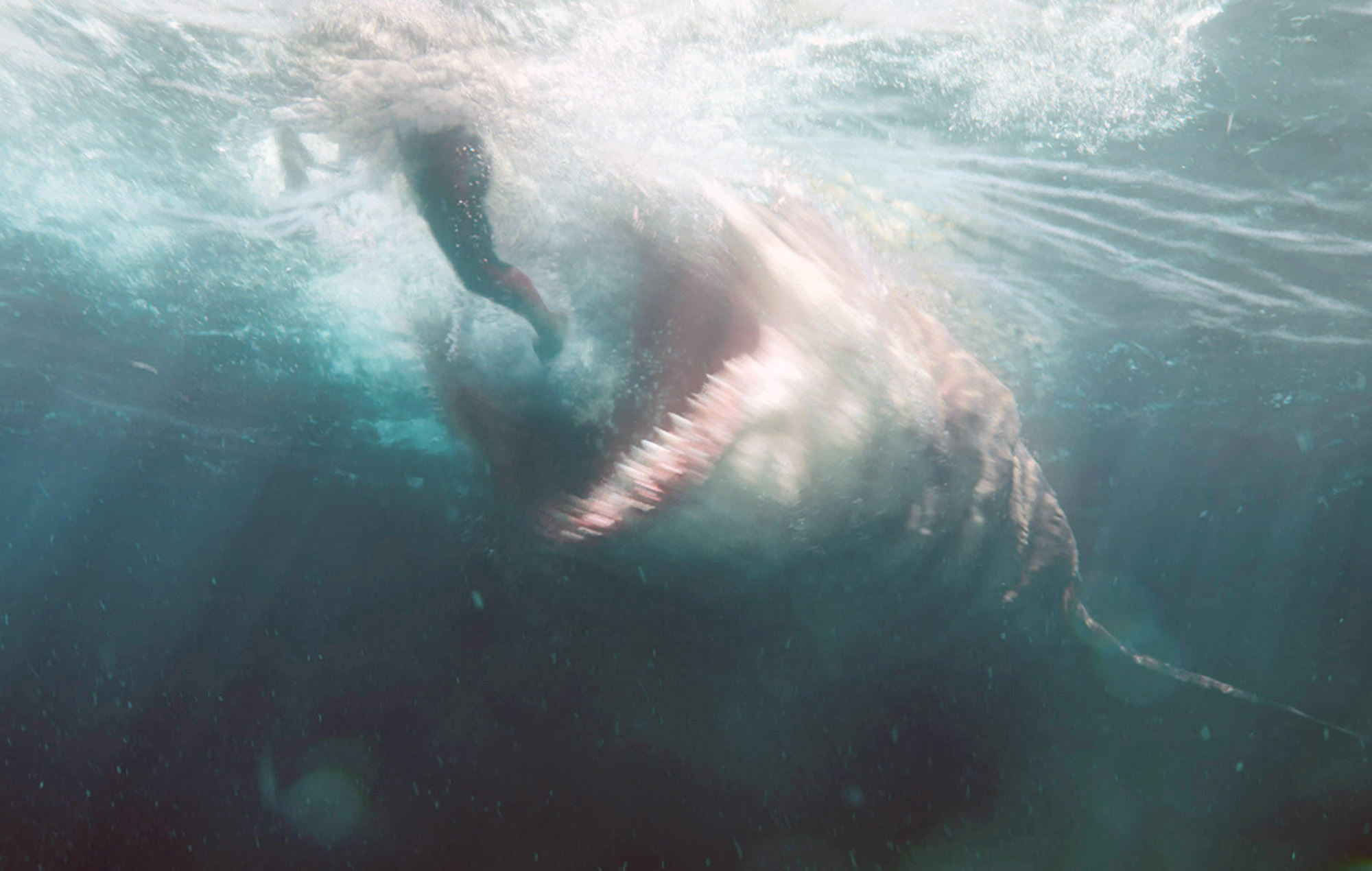 megalodon shark movie - 1200×633