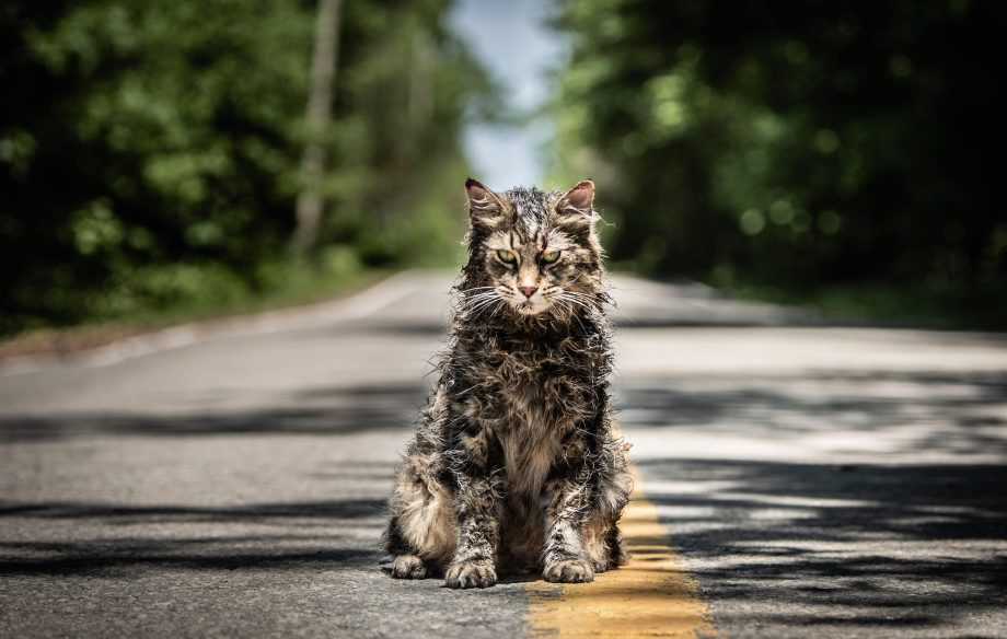 Leo the Cat from \u0027Pet Sematary\u0027 has died just weeks after